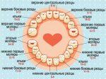 До скольки режутся зубы у детей – До скольки лет растут зубы у детей и от чего это зависит